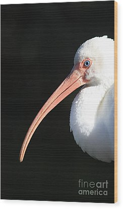 White Ibis Profile Wood Print