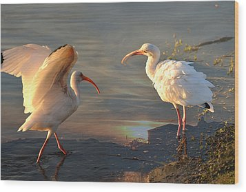 White Ibis - Ready For The Roost Wood Print