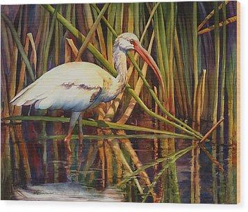 White Ibis Wood Print by Sue Zimmermann