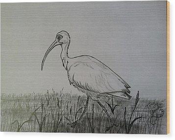 White Ibis Wood Print by Tony Clark
