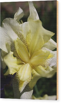 Wood Print featuring the photograph White Iris by Bruce Bley