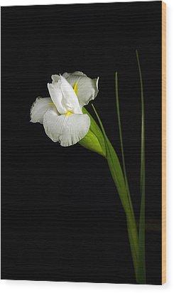 Wood Print featuring the photograph White Iris by Elsa Marie Santoro