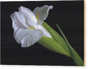 Wood Print featuring the photograph White Iris II by Elsa Marie Santoro