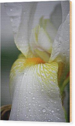 White Iris Study No 7 Wood Print by Teresa Mucha