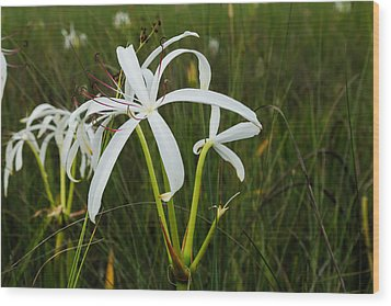 White Lilies In Bloom Wood Print by Christopher L Thomley