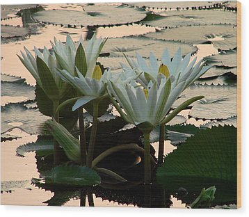 White Lillies Wood Print by Kimberly Camacho