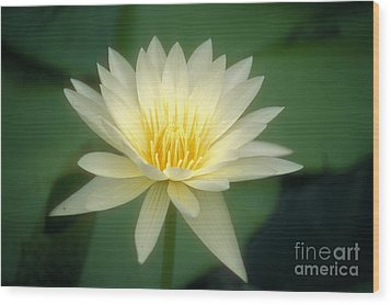 White Lily Wood Print by Ron Dahlquist - Printscapes