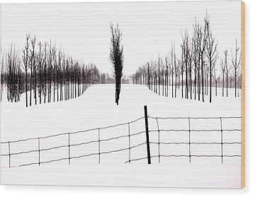 White Lines Fenced In  Wood Print by Russell Styles