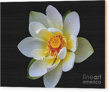 White Lotus Flower Wood Print by Lisa L Silva