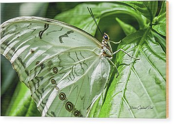 Wood Print featuring the photograph White Morpho Butterfly by Joann Copeland-Paul