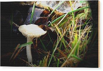 White Mushroom Wood Print