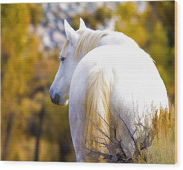 White Mustang Mare Wood Print