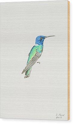 White-necked Jacobin Wood Print
