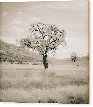 White Oak Wood Print