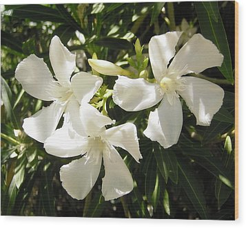 White Oleander Flowers Wood Print