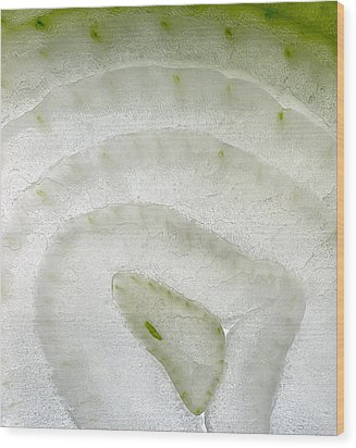 White Onion Slice Wood Print by Janeen Wassink Searles