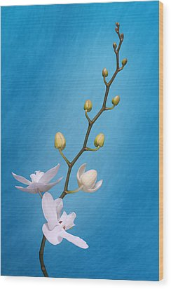 White Orchid Buds On Blue Wood Print by Tom Mc Nemar