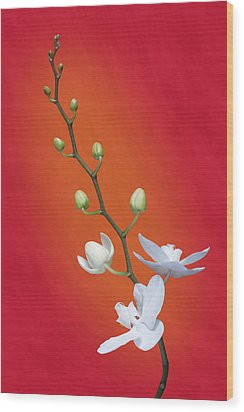 White Orchid Buds On Red Wood Print by Tom Mc Nemar