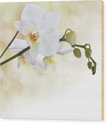 White Orchid Flower Wood Print by Pics For Merch