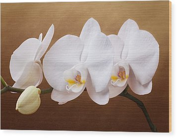 White Orchid Flowers And Bud Wood Print by Tom Mc Nemar