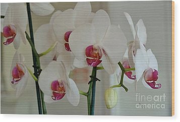 White Orchid Mothers Day Wood Print by Marsha Heiken