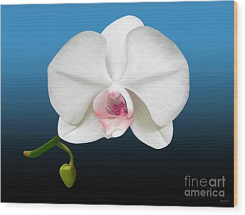 White Orchid Wood Print by Rand Herron