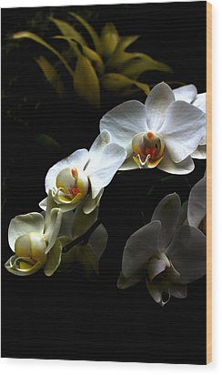 White Orchid With Dark Background Wood Print