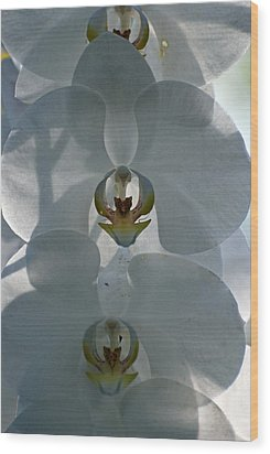 Wood Print featuring the photograph White Orchids  by Teresa Blanton