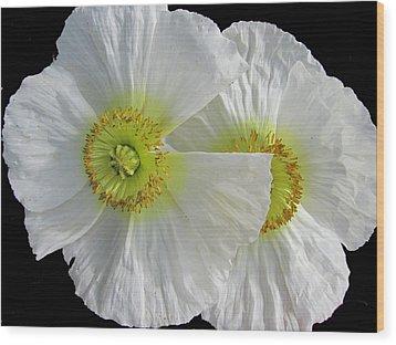 White Oriental Poppies Wood Print by Judith Turner