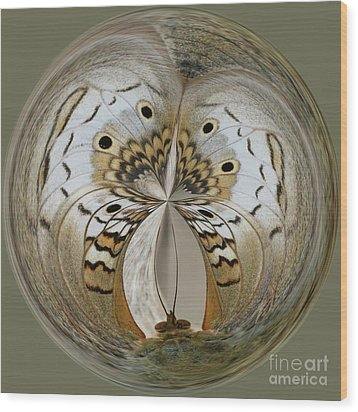 White Peacock Butterfly Orb Wood Print