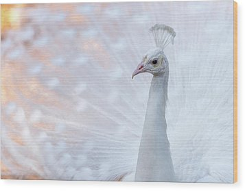 White Peacock Wood Print by Sebastian Musial
