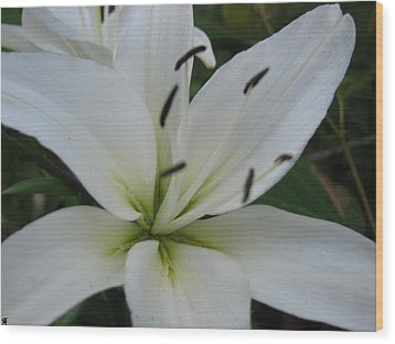 Wood Print featuring the photograph White Pearl by Debra     Vatalaro