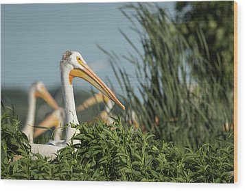 Wood Print featuring the photograph White Pelican 7-2015 by Thomas Young