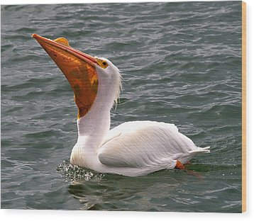 Wood Print featuring the photograph White Pelican And Lunch by Phil Stone