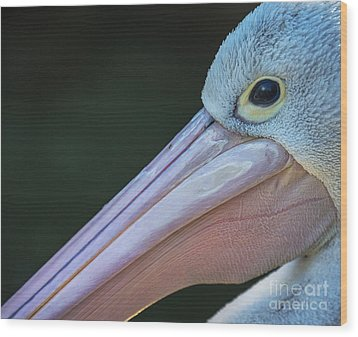 White Pelican Close Up Wood Print by Avalon Fine Art Photography