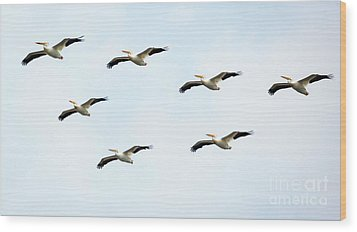 Wood Print featuring the photograph White Pelican Flyby by Ricky L Jones