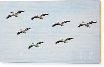 White Pelican Flyby Wood Print by Ricky L Jones