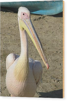 Wood Print featuring the photograph White Pelican by Sally Weigand