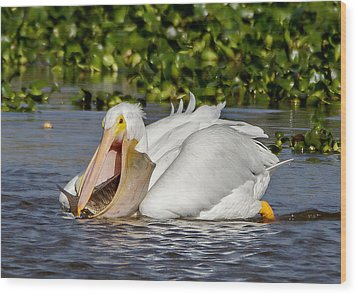 Wood Print featuring the photograph White Pelican With A Huge Catch by Phil Stone