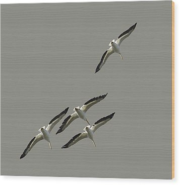 White Pelicans Transparency Wood Print