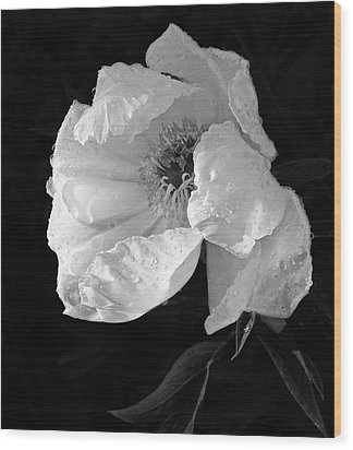 White Peony After The Rain In Black And White Wood Print by Gill Billington