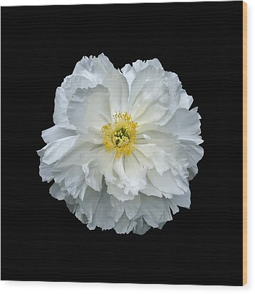 White Peony Wood Print by Charles Harden
