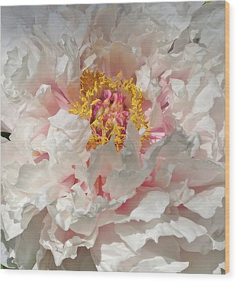 Wood Print featuring the photograph White Peony by Sandy Keeton