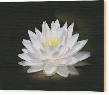 White Petals Glow - Water Lily Wood Print by MTBobbins Photography