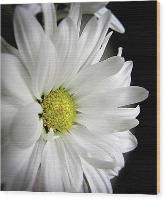 White Petals Wood Print by Julie Palencia