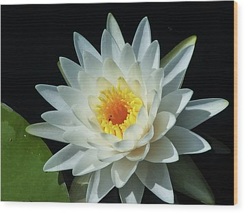 Wood Print featuring the photograph White Pond Lily by Arthur Dodd