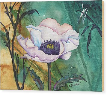 White Poppy On Teal Wood Print by Renee Chastant