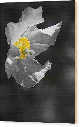 White Poppy Wood Print by Svetlana Sewell