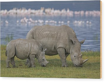 White Rhino Mother And Calf Grazing Wood Print by Ingo Arndt