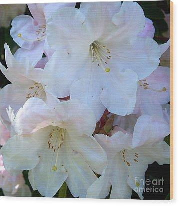 White Rhododendron Wood Print by Vera Gadman